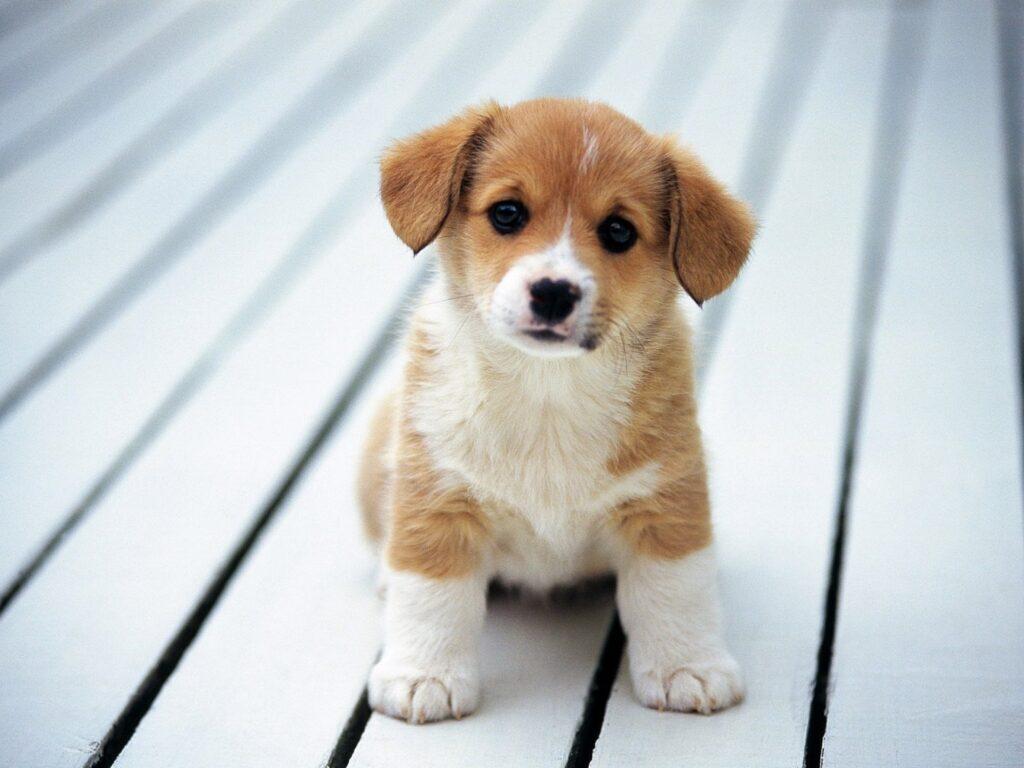 motivos por los que un perro no ladra
