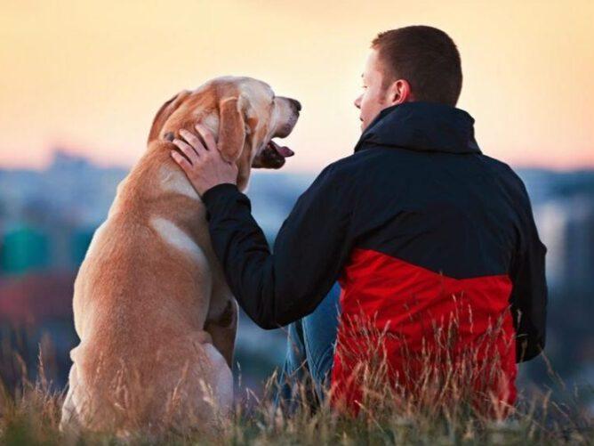 como acercarme y comunicarme con mi perro