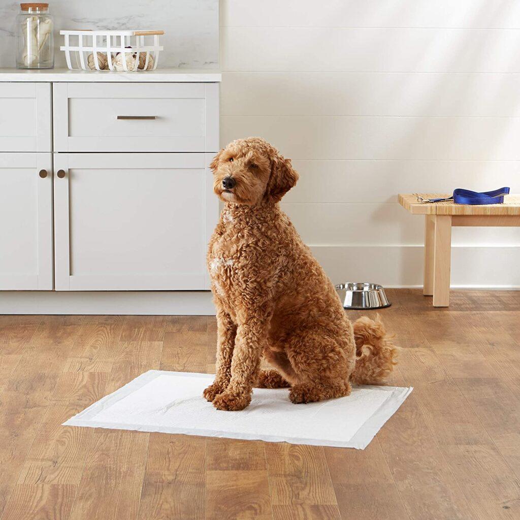 toallitas de entrenamiento canino