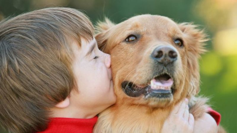 perros ideales para amos primerizos