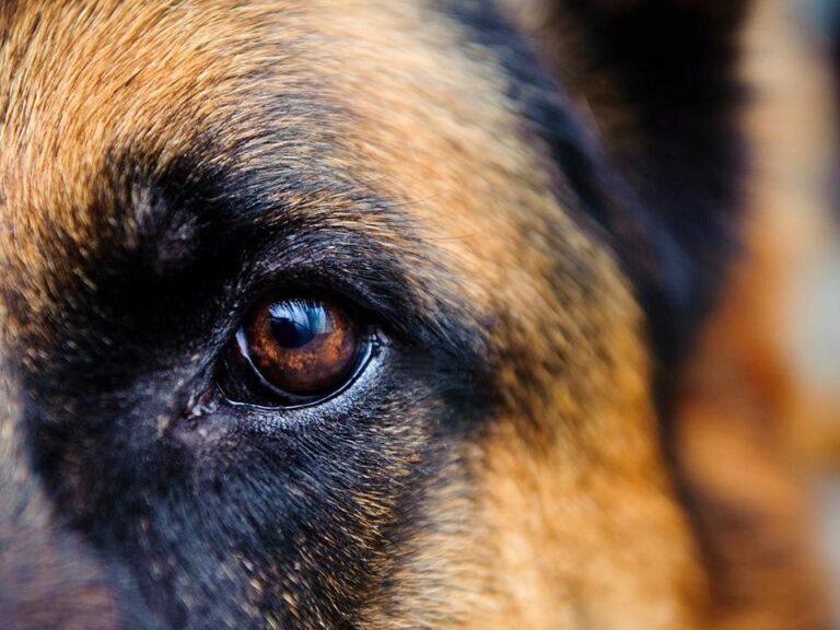 limpieza ocular canina 2020